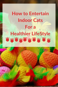 how to entertain indoor cats for a healthier and happier lifestyle
