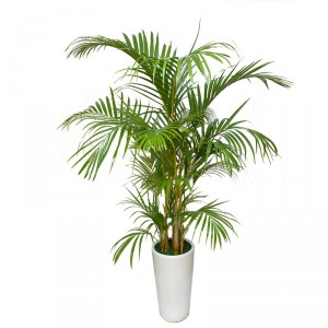 Cat safe houseplants - Areca palm