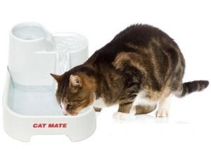 catmate cat