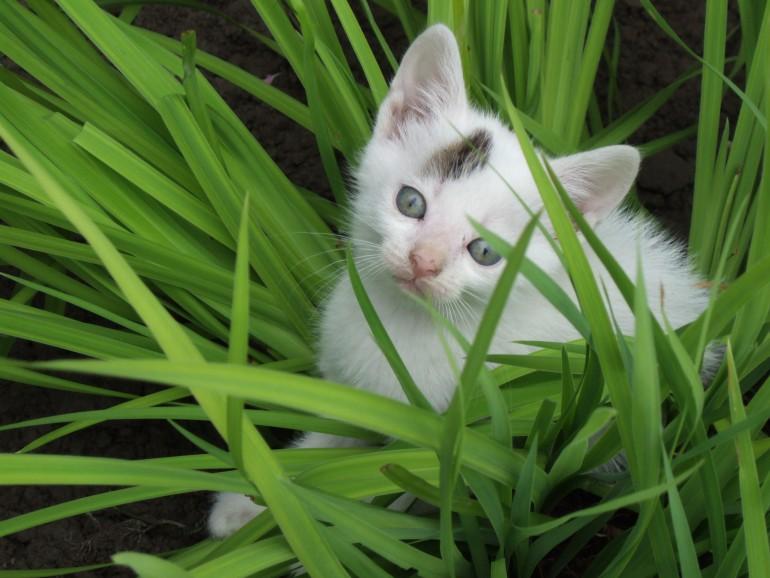 cat friendly houseplants 10 non toxic plants cool stuff for cats. Black Bedroom Furniture Sets. Home Design Ideas