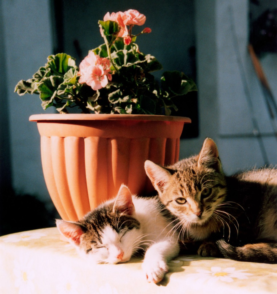 having a happy and healthy kitten - kittens chilling