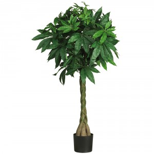 Cat safe houseplants - money tree