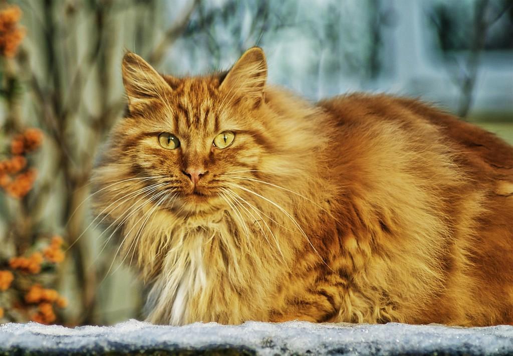 Indoor versus outdoor cats - cat enjoying a safe garden