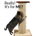 Cat Product Guide to Sisal Scratching Posts - the Mondo from Purrfect Post