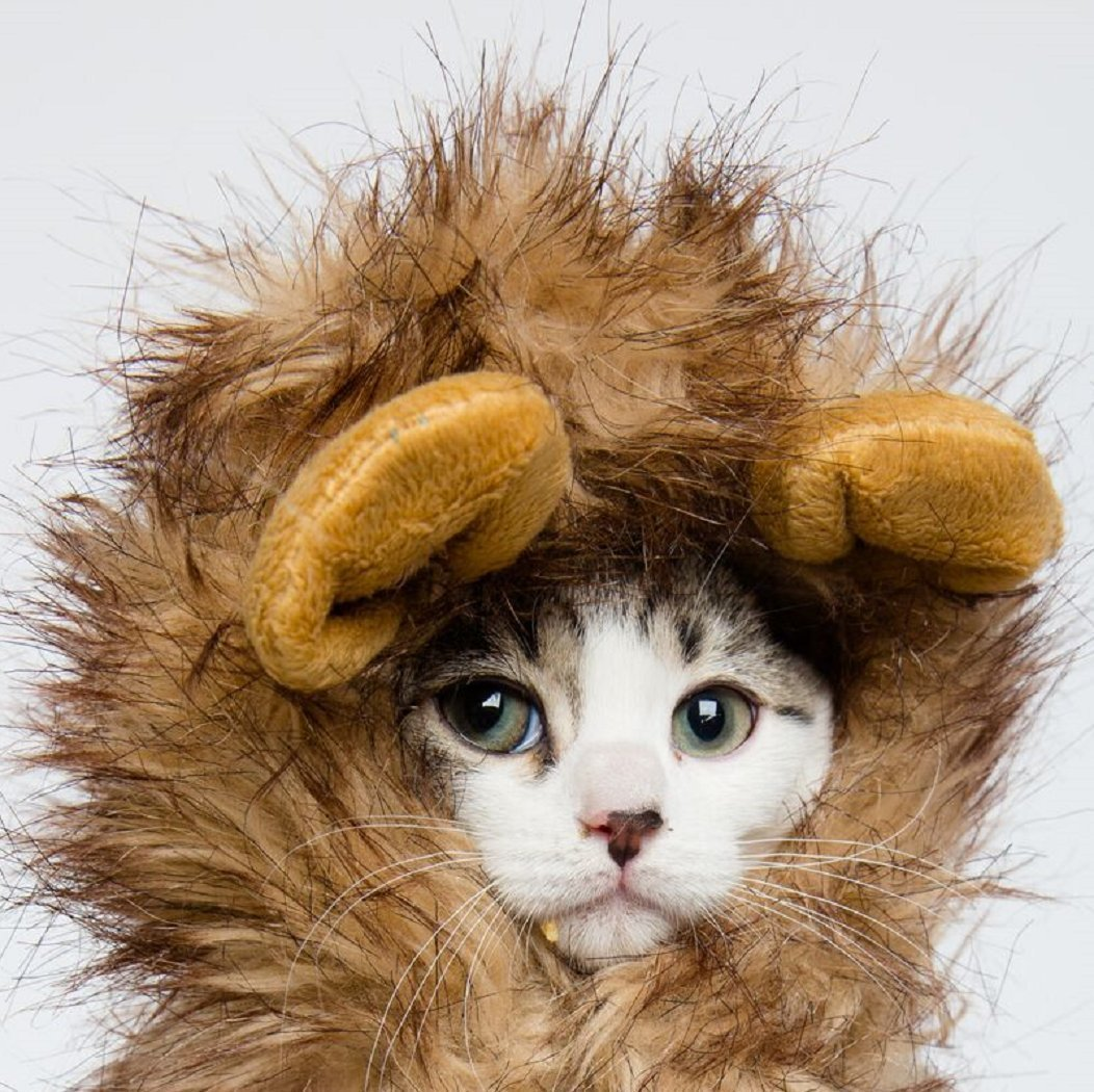 cat halloween costume in scary lion