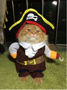 Cat Halloween Costumes - The Cutest Pet Costumes - Cool Stuff for Cats