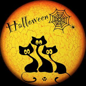 how to keep cats safe on halloween. Black cats can be doubly unsafe during halloween