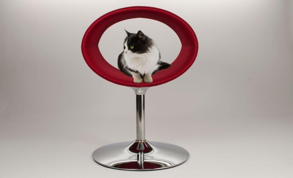 orbit cat bed