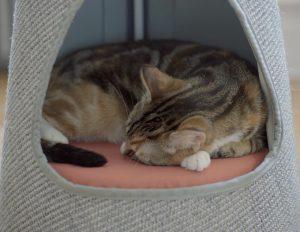 WISKI The cone sleeping area
