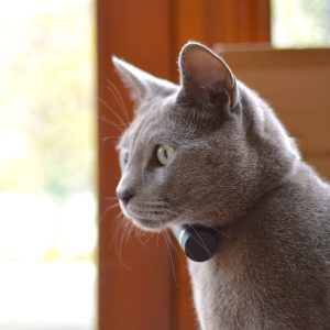 Pod GPS Pet Tracker for your cat