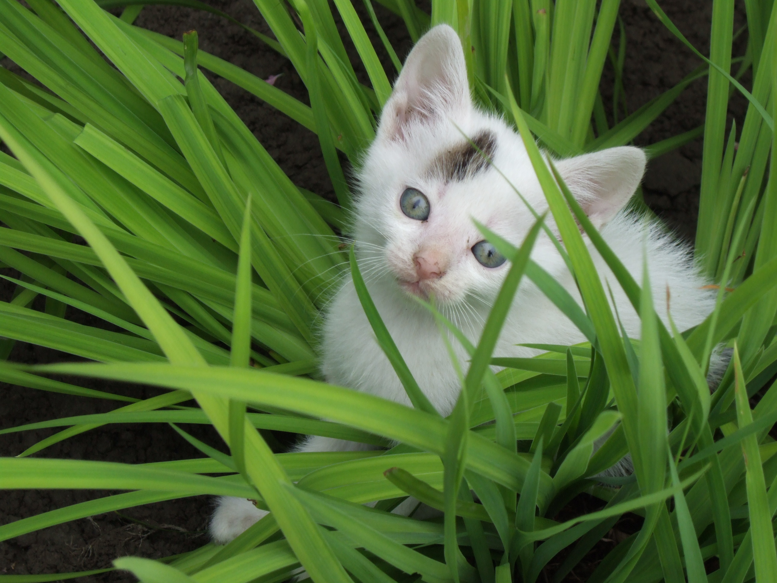 Non Toxic Plants For Cats Pictures