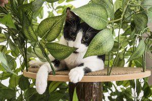 CatHaven Cat Condo