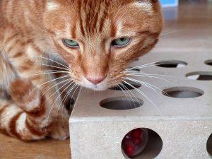 Smitten Kitten Cat Toy Box