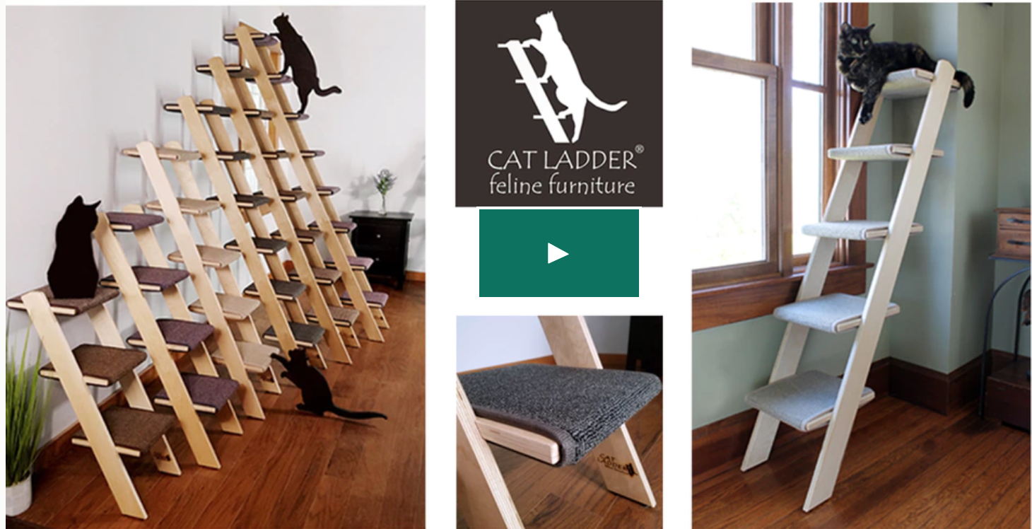 cat ladders on kickstarter